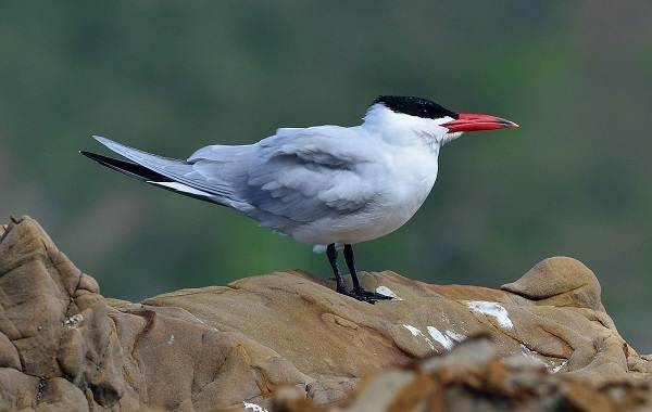 Птицы-Кубани-Описание-названия-виды-и-фото-птиц-33