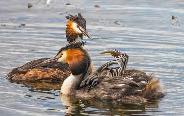 Птицы-Кубани-Описание-названия-виды-и-фото-птиц-34