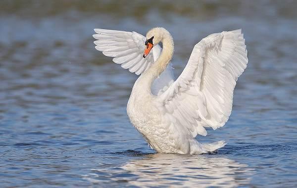 Птицы-Кубани-Описание-названия-виды-и-фото-птиц-36
