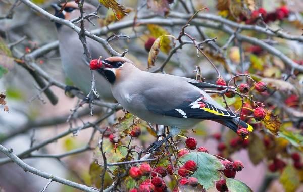 Птицы-Кубани-Описание-названия-виды-и-фото-птиц-40