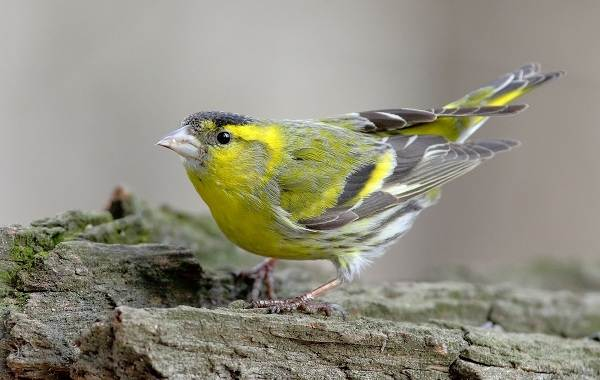 Птицы-Кубани-Описание-названия-виды-и-фото-птиц-41