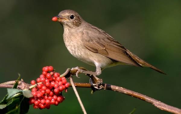 Птицы-Кубани-Описание-названия-виды-и-фото-птиц-43