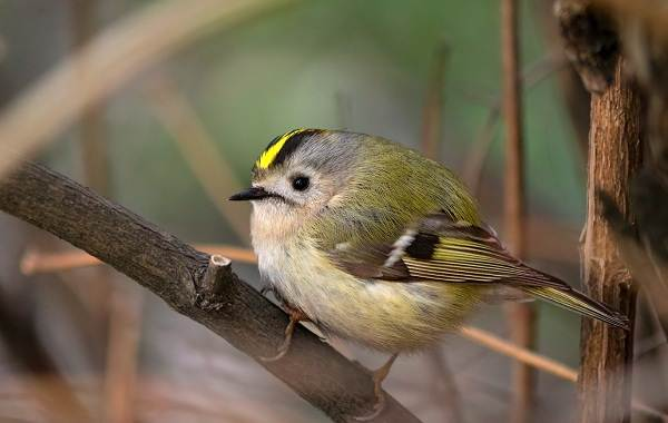 Птицы-Кубани-Описание-названия-виды-и-фото-птиц-44
