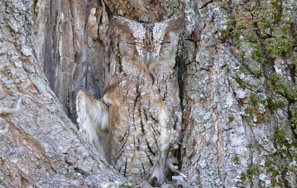 Птицы-Кубани-Описание-названия-виды-и-фото-птиц-46