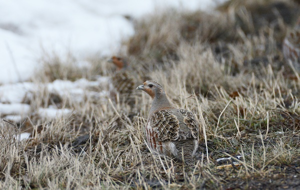 Птицы-Кубани-Описание-названия-виды-и-фото-птиц-47