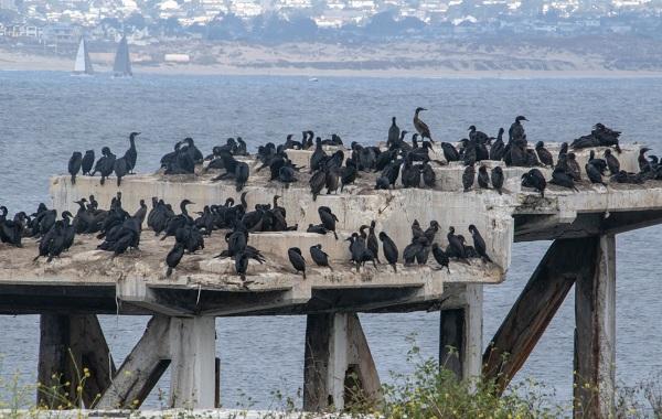 Птицы-Кубани-Описание-названия-виды-и-фото-птиц-48