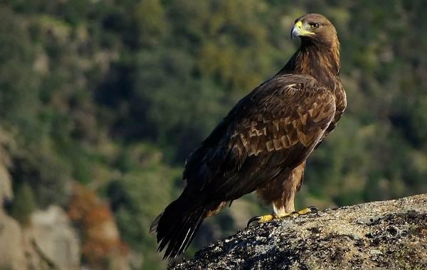 Птицы-Кубани-Описание-названия-виды-и-фото-птиц-5