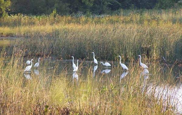 Птицы-Кубани-Описание-названия-виды-и-фото-птиц-51