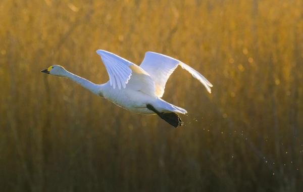 Птицы-Кубани-Описание-названия-виды-и-фото-птиц-52