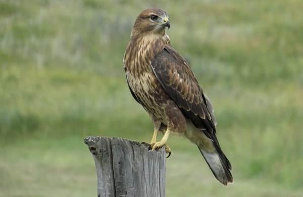 Птицы-Кубани-Описание-названия-виды-и-фото-птиц-6