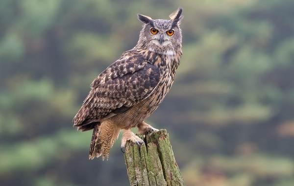 Птицы-Кубани-Описание-названия-виды-и-фото-птиц-7