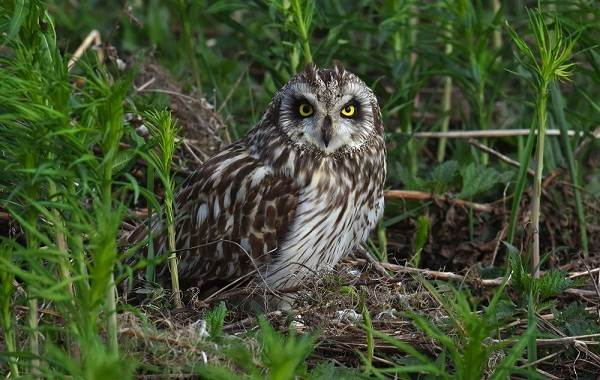 Птицы-Кубани-Описание-названия-виды-и-фото-птиц-8