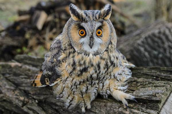 Птицы-Кубани-Описание-названия-виды-и-фото-птиц-9