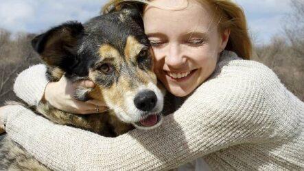 Животные спасают людей