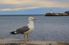 Птицы полуострова Крым. Виды, названия и образ жизни птиц Крыма