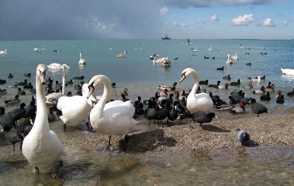 Птицы-полуострова-Крым-Виды-названия-и-образ-жизни-птиц-Крыма-2