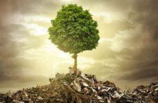 Влияние экологии на жизнь животных