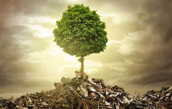 Влияние-экологии-на-жизнь-животных-1