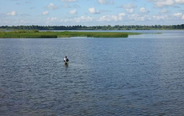 12-лучших-рыболовных-мест-Алтайского-края-Бесплатные-водоёмы-5