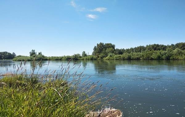 12-лучших-рыболовных-мест-в-Тюменской-области-5