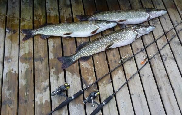 12-лучших-рыболовных-мест-в-Тюменской-области-9