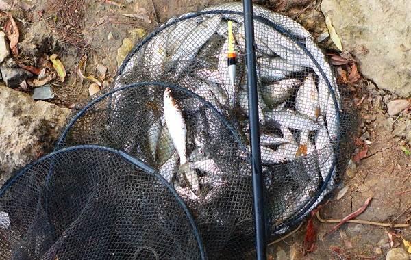 Где-как-на-что-и-в-какое-время-года-ловить-рыбу-уклейку-6