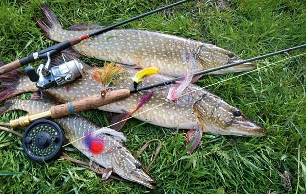12-лучших-рыболовных-мест-Курганской-области-12