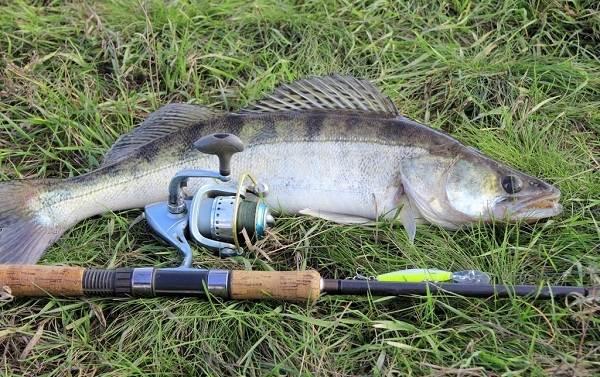 12-лучших-рыболовных-мест-Курганской-области-14
