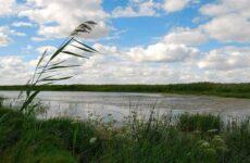 12 лучших рыболовных мест Курганской области