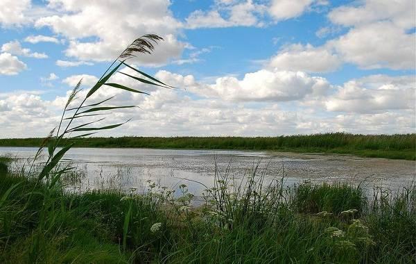 12-лучших-рыболовных-мест-Курганской-области-5