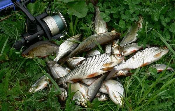 12-лучших-рыболовных-мест-Курганской-области-9