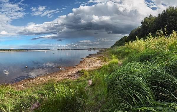 12-лучших-рыболовных-мест-в-Архангельской-области-Платные-и-бесплатные-3