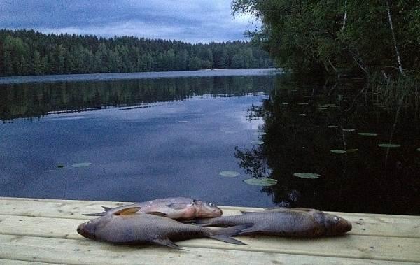 12-лучших-рыболовных-мест-в-Архангельской-области-Платные-и-бесплатные-7