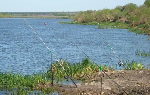 12-лучших-рыболовных-мест-в-Липецкой-области-Платные-и-бесплатные-1