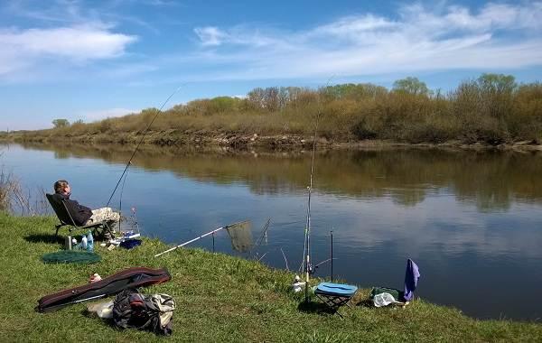 12-лучших-рыболовных-мест-в-Липецкой-области-Платные-и-бесплатные-4