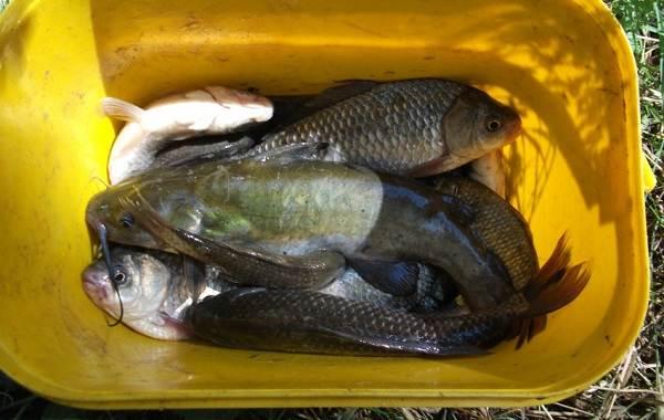 15-лучших-рыболовных-мест-на-Кубани-Бесплатные-и-платные-3