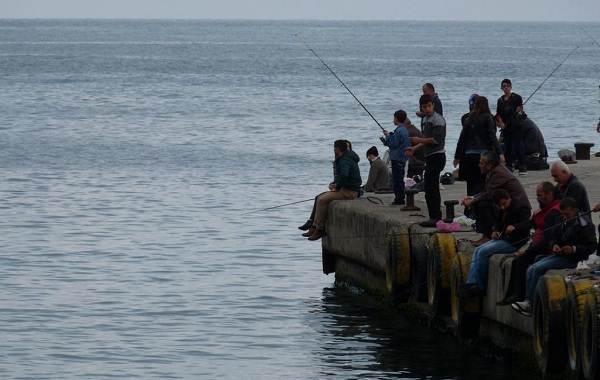 15-лучших-рыболовных-мест-на-Кубани-Бесплатные-и-платные-8