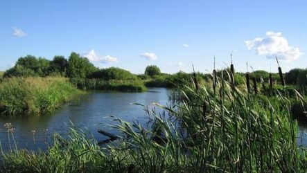 15 лучших рыболовных мест в Тульской области