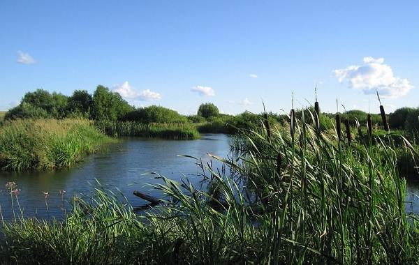 15-лучших-рыболовных-мест-в-Тульской-области-9