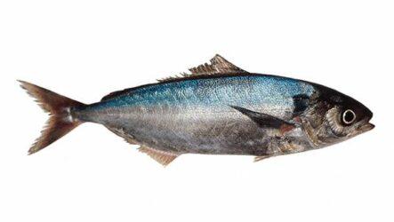 Саворин рыба. Описание, особенности, образ жизни и среда обитания