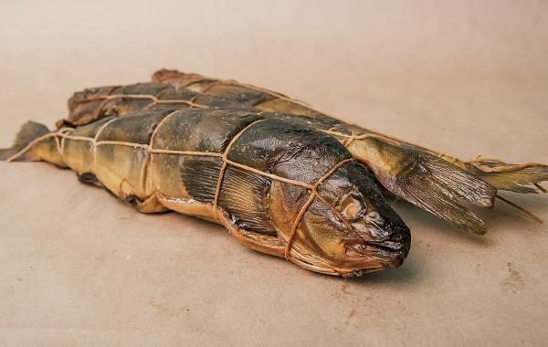 Терпуг-рыба-Описание-особенности-образ-жизни-и-среда-обитания-хищницы-4