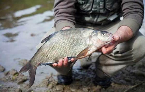 15-лучших-рыболовных-мест-Смоленской-области-Бесплатные-и-платные-9