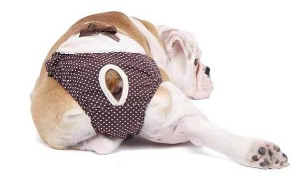 Течка-у-собак-сколько-длится-и-что-делать-7