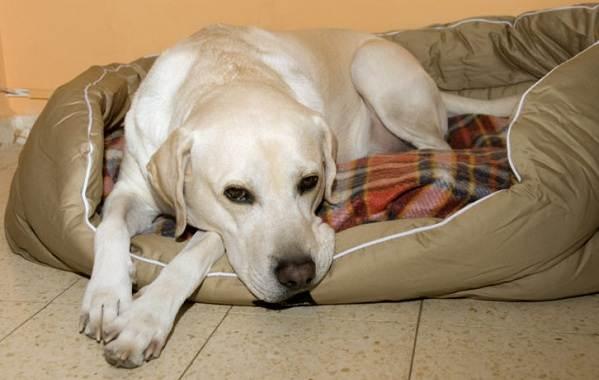 Течка-у-собак-сколько-длится-и-что-делать-8