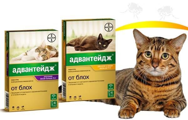 15-лучших-капель-на-холку-от-блох-для-кошек-6