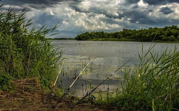 15-лучших-рыболовных-мест-в-Тамбовской-области-Платные-и-бесплатные-1