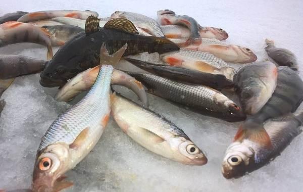 15-лучших-рыболовных-мест-в-Тамбовской-области-Платные-и-бесплатные-10