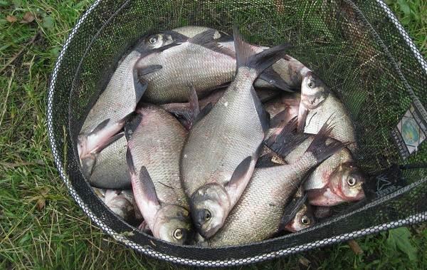 15-лучших-рыболовных-мест-в-Тамбовской-области-Платные-и-бесплатные-7
