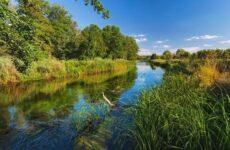 15 лучших рыболовных мест Воронежской области. Платные и бесплатные