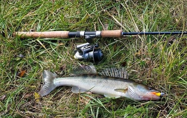 15-лучших-рыболовных-мест-Воронежской-области-Платные-и-бесплатные-3